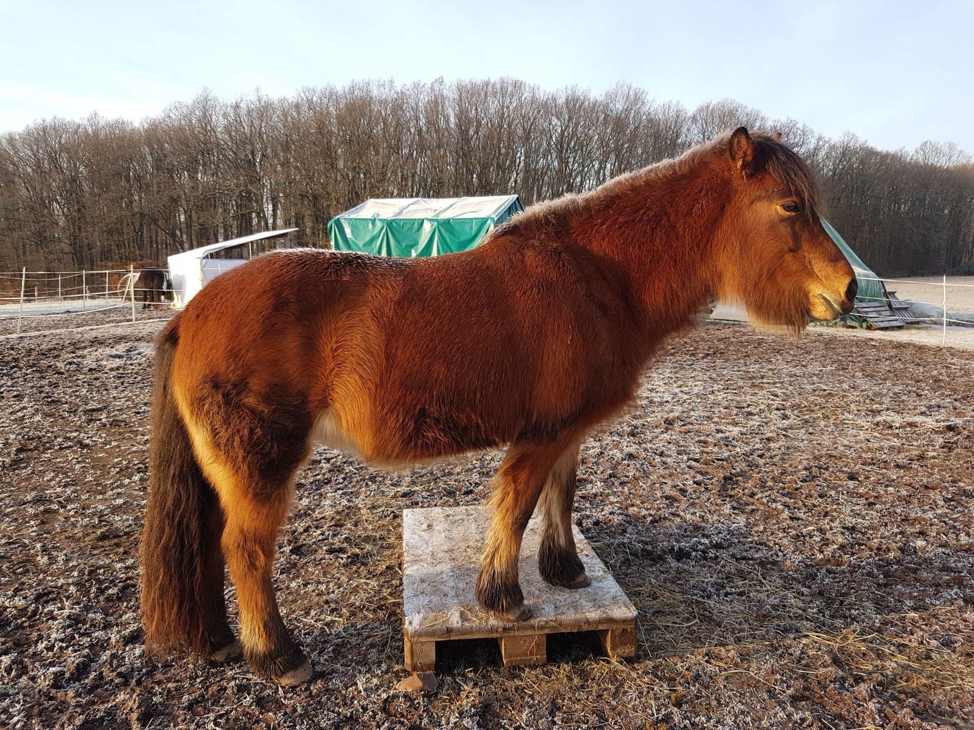 Was wünscht sich dein Pferd und wie findest du es heraus?